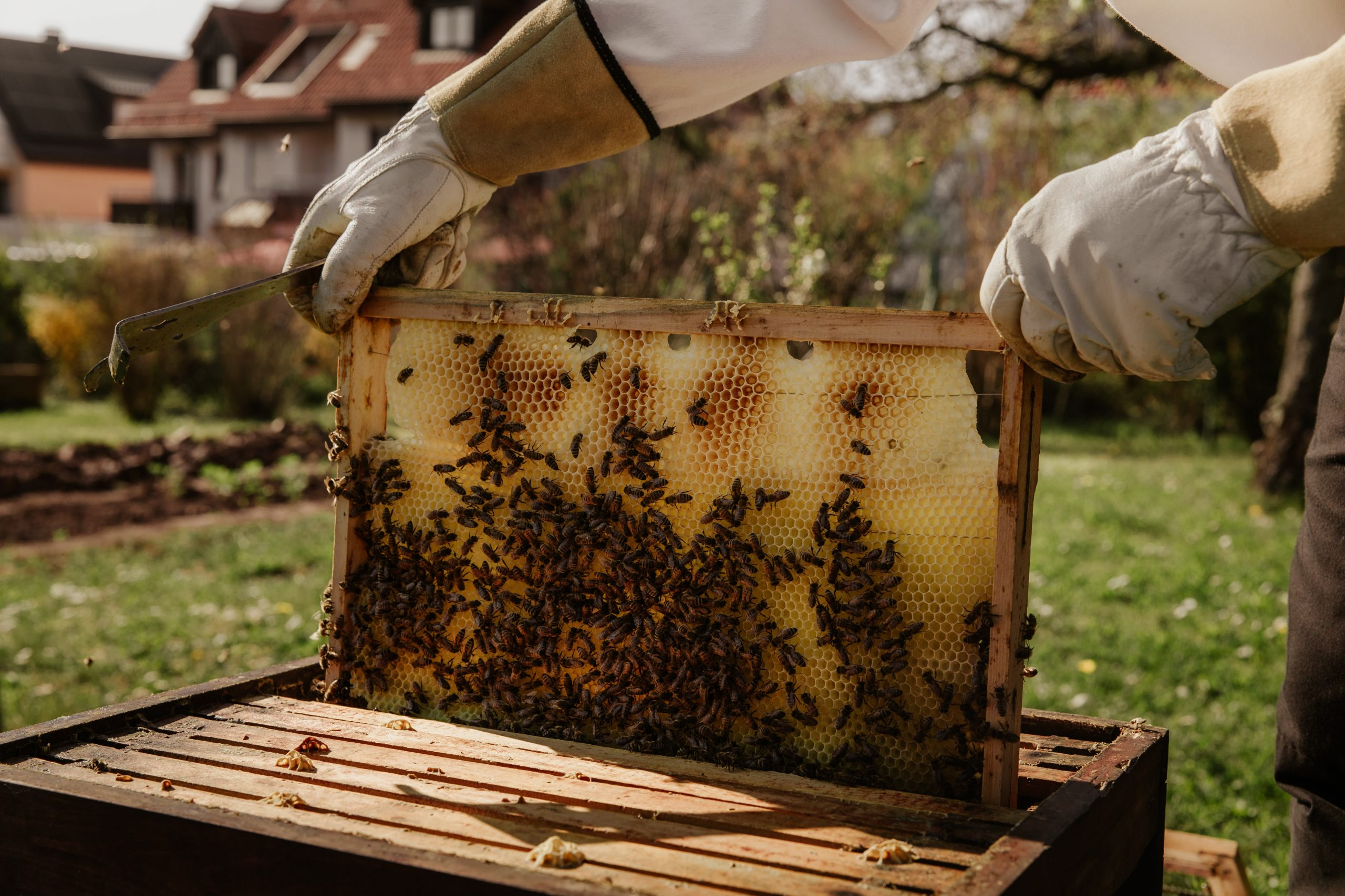 Beekeeper with movable frame honey